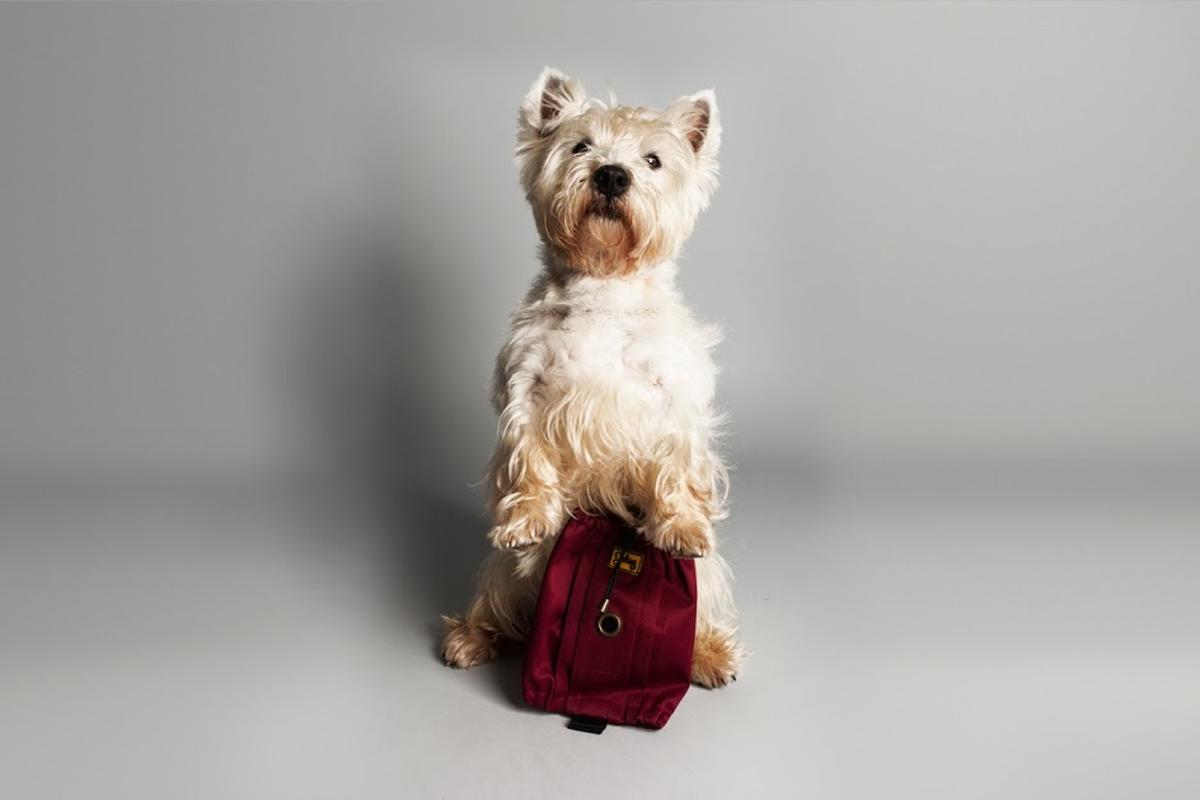 The Jekies Glovebag is designed to make picking up after your pooch more civilized