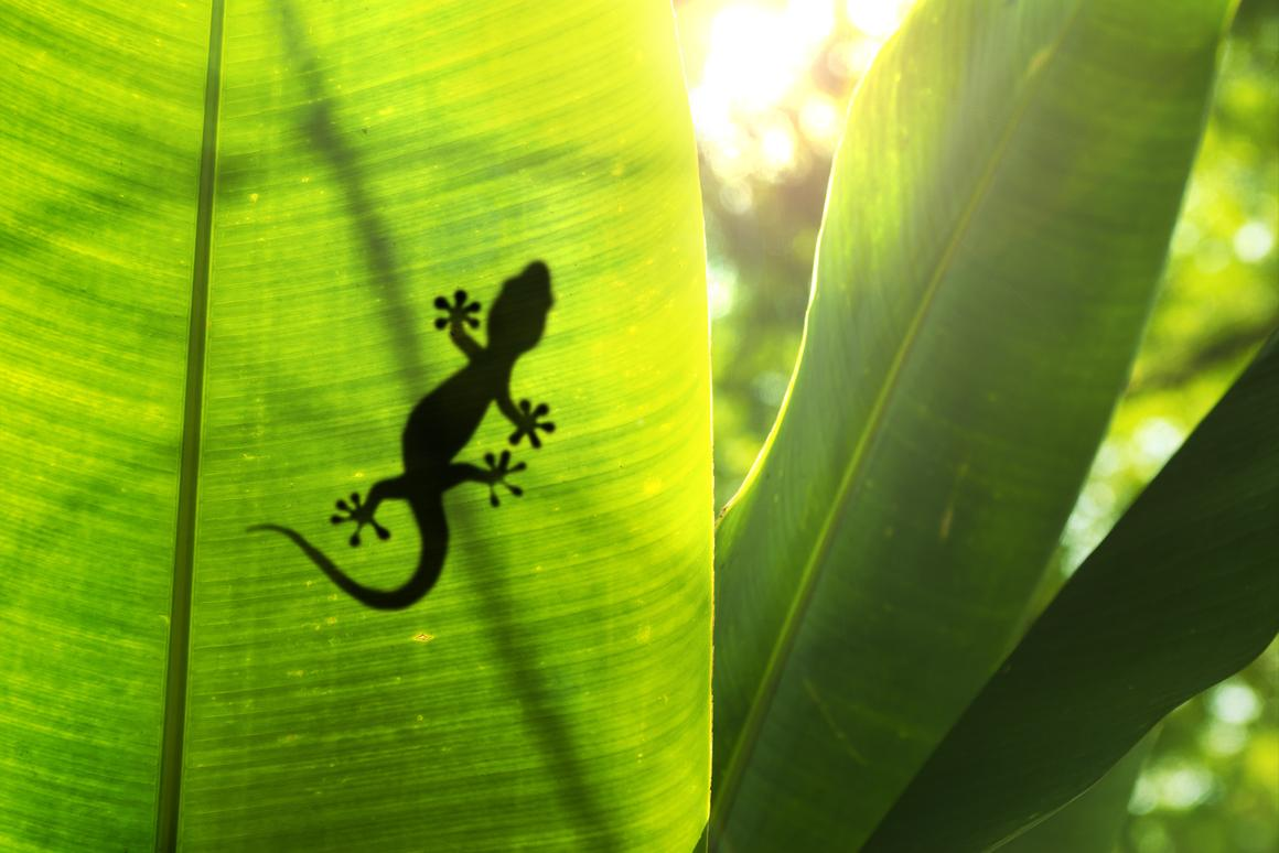 """The super-adhesive """"Geckskin"""" can stick a 700-pound load to the wall without leaving a sticky residue (Photo: Shutterstock)"""