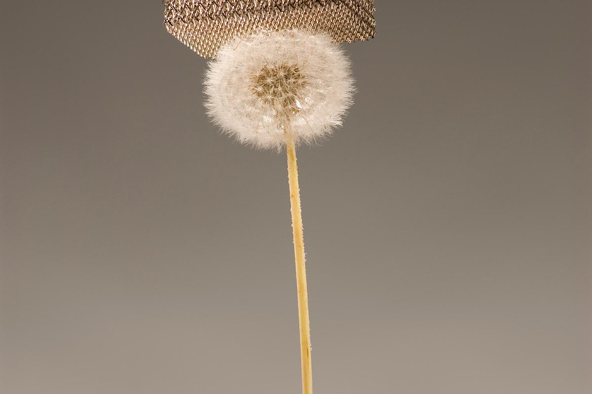 The new micro-lattice material is so light that it can sit atop dandelion fluff without damaging it (Image: Dan Little, HRL Laboratories, LLC)