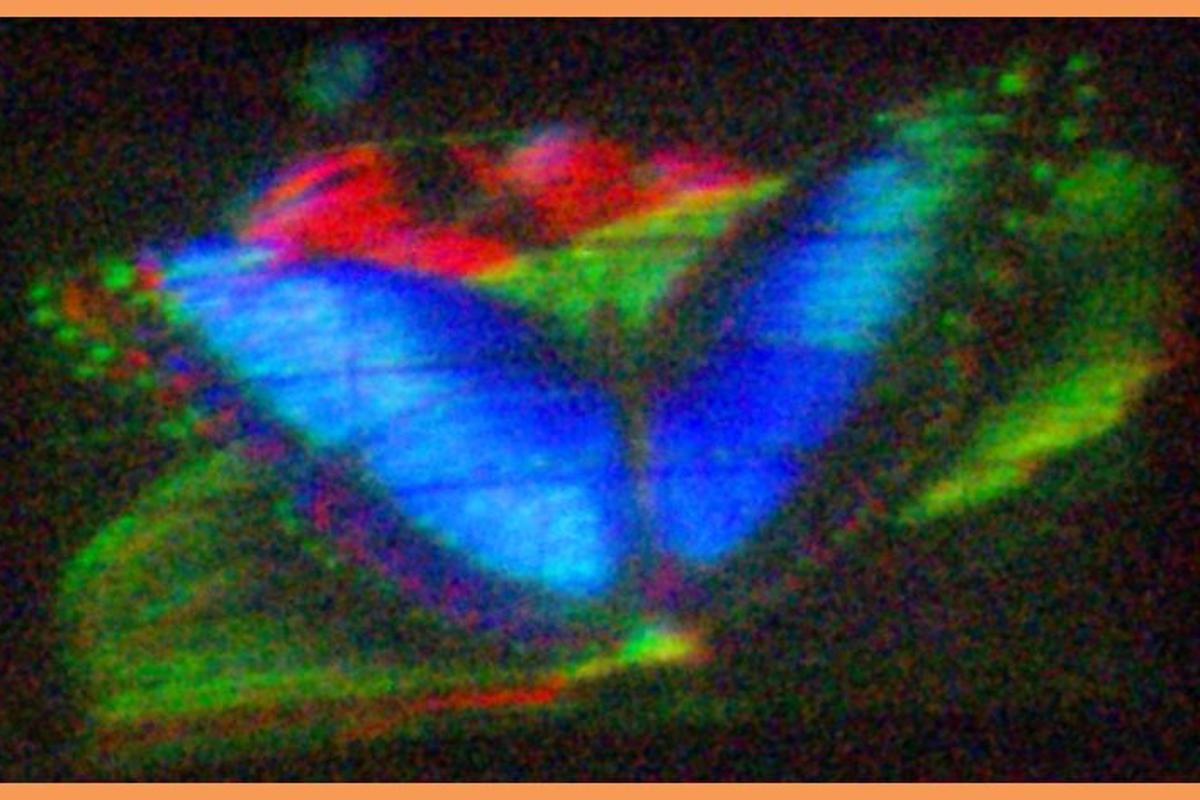 A butterfly imaged on MIT's new holographic display