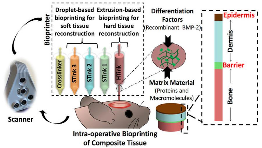 A schematic of the new combination skin-and-bone bioprinting technique