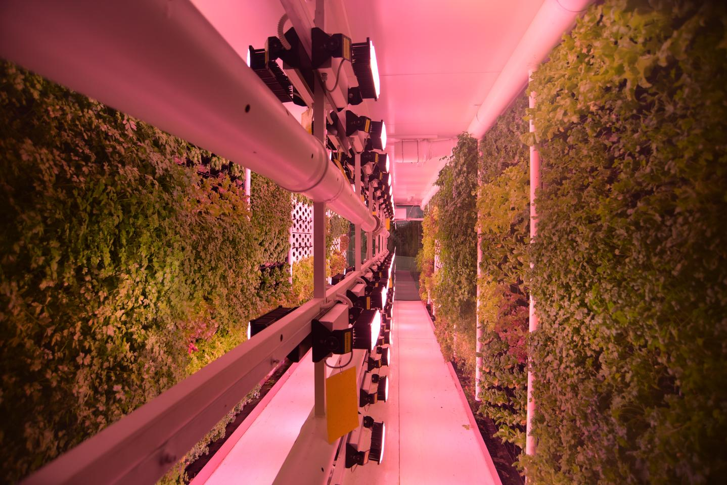 Vertical Field's urban farms grow walls of veggies inside recycled shipping containers