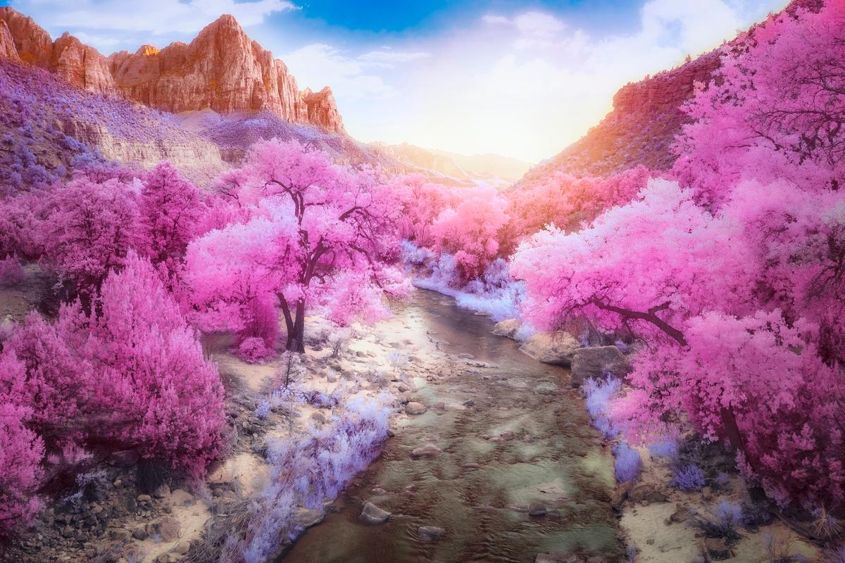 First place winner in the Infrared Color category of the Life in Another Light competition- The Watchman
