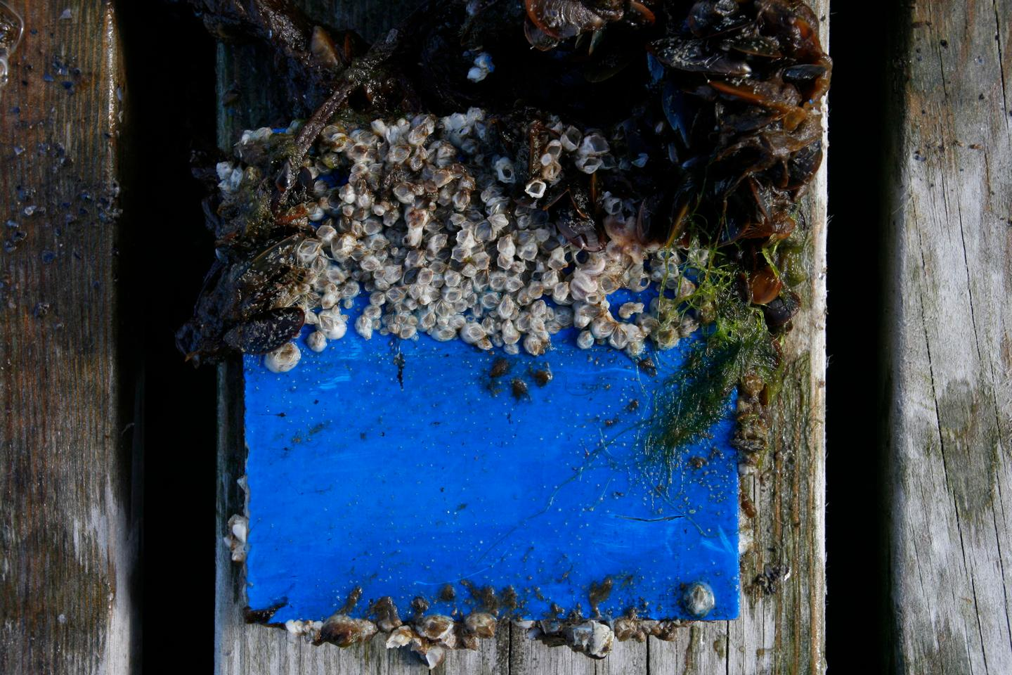 New Tech Could Allow For More Eco Friendly Barnacle