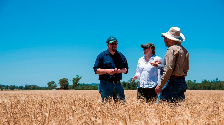 The CSIRO researchers in a field of Kebari barley