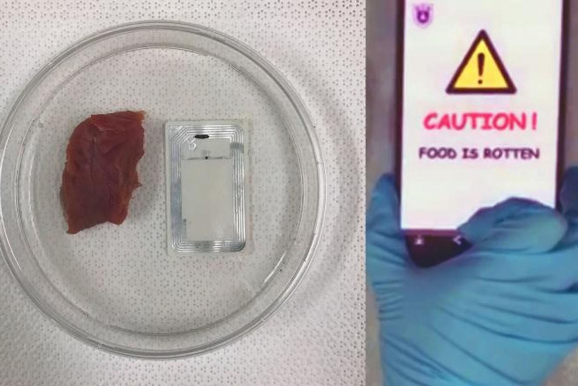 One of the sensor-equipped NFC tags squeals on a piece of rotten meat