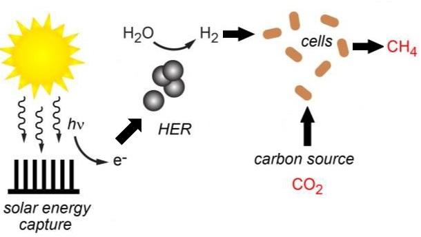 The enhanced hybrid artificial photosynthesis system produces hydrogen, which is used to them produce methane from carbon dioxide