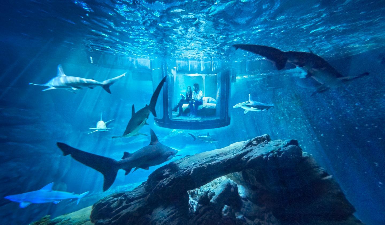 The underwater bedroom is located at France's Aquarium de Paris