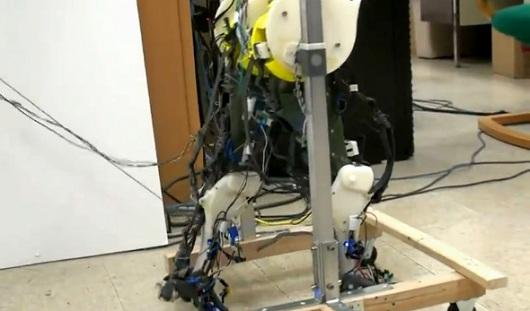 This biologically accurate set of robotic legs comprises simplified versions of the human neural, musculoskeletal and sensory feedback systems