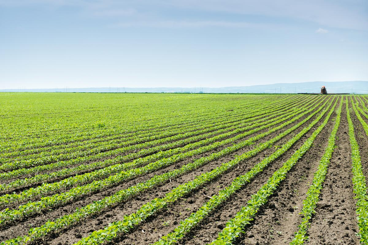Pulverizing rocks and scattering them on croplands could give the soil's carbon capture ability a game-changing boost, a new study has found