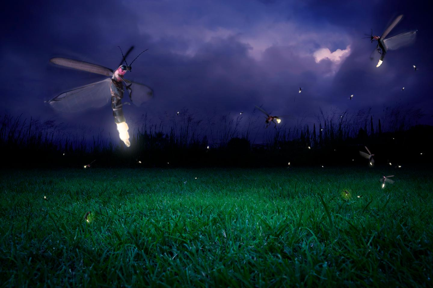 """Fireflies may use a """"musical armor"""" of ultrasound to defend themselves against bats"""