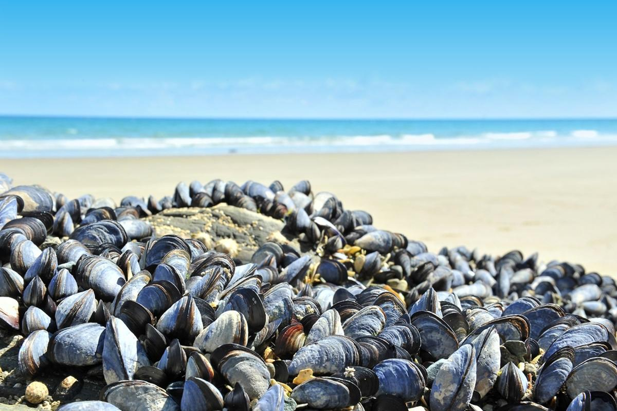 Scientists have created a mussel-inspired gel, which may ultimately save human lives (Photo: Shutterstock)