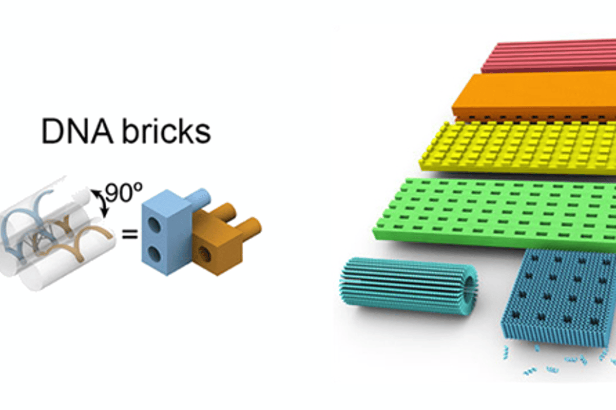 Researchers have used a DNA brick self-assembly method to build 32 different crystal structures with sophisticated 3D features (Image: Harvard's Wyss Institute)