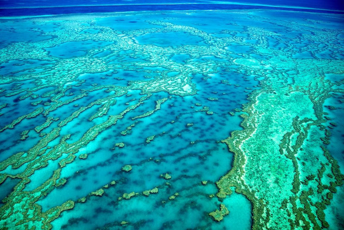 Scientists have discovered that corals on the Great Barrier Reef emit compounds that end up as aerosols above them for cooling