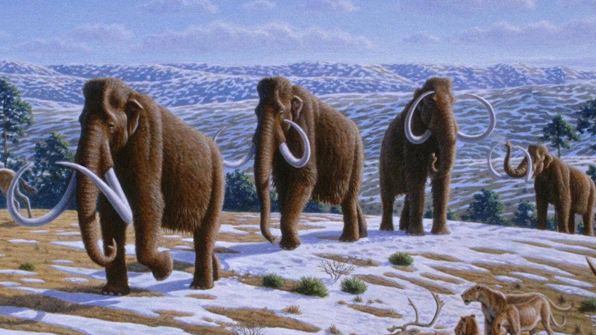 Woolly mammoths in a late Pleistocene landscape in northern Spain (Image: Mauricio Anton via PLoS Biology)