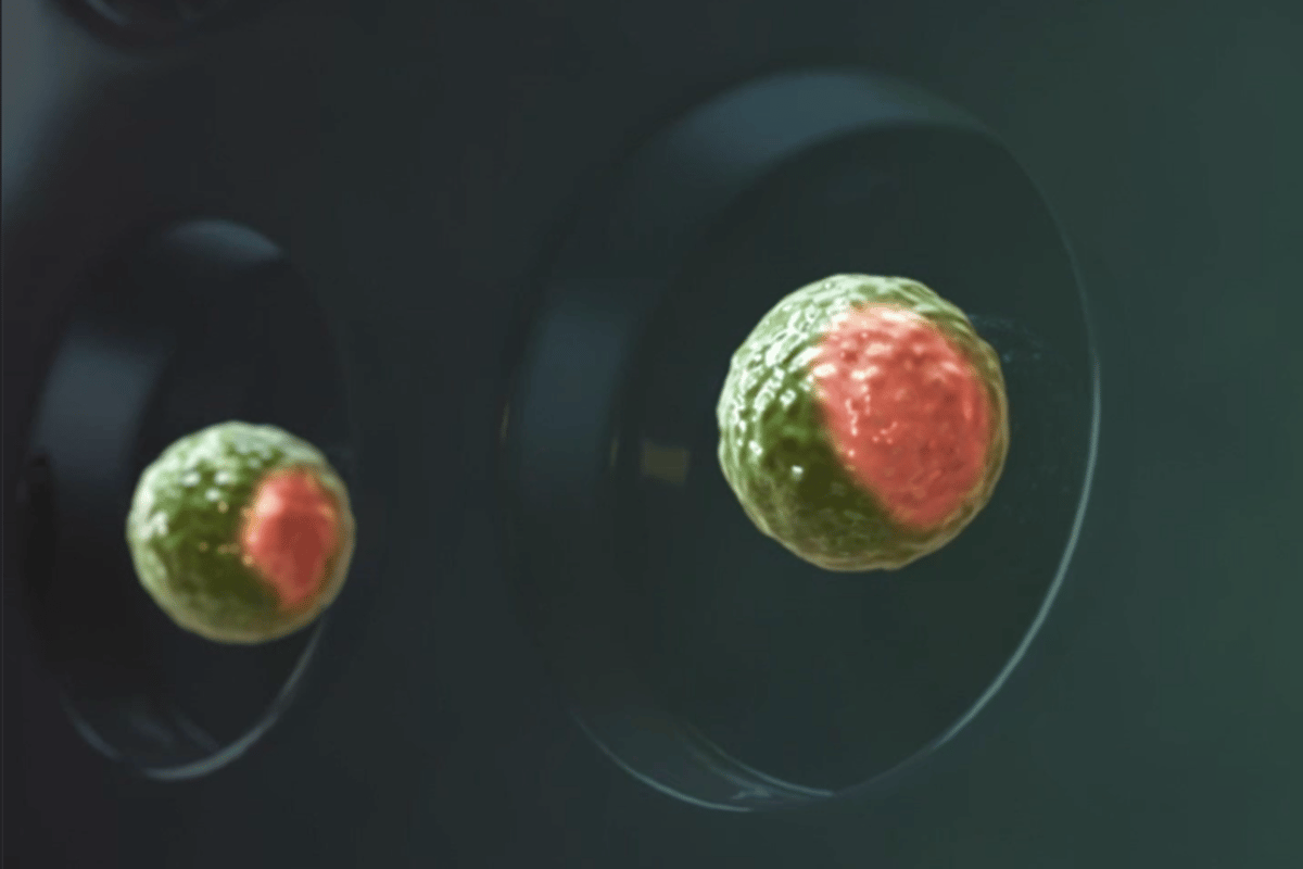 Dutch scientists have managed to create synthetic embryos by combining stem cells in the lab