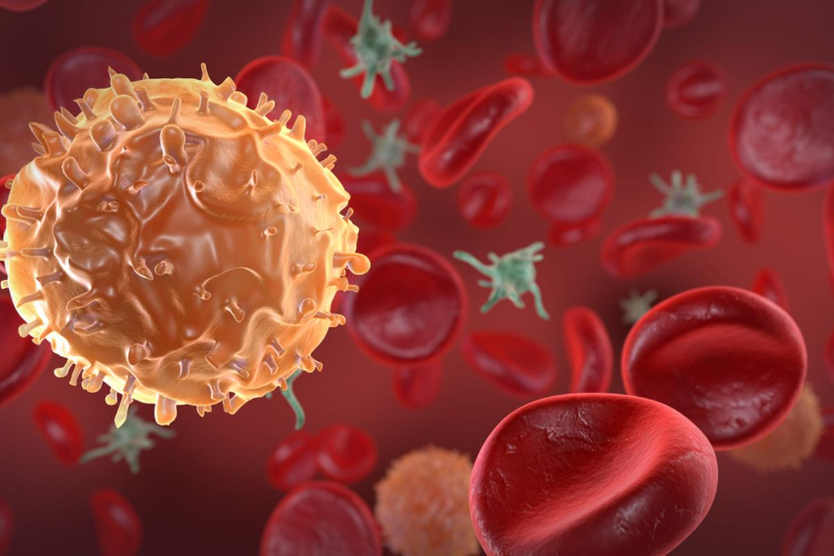 Scientists have had success in tracking the passage of blood cells within the body, by labeling them with magnetic particles (Photo via Shutterstock)