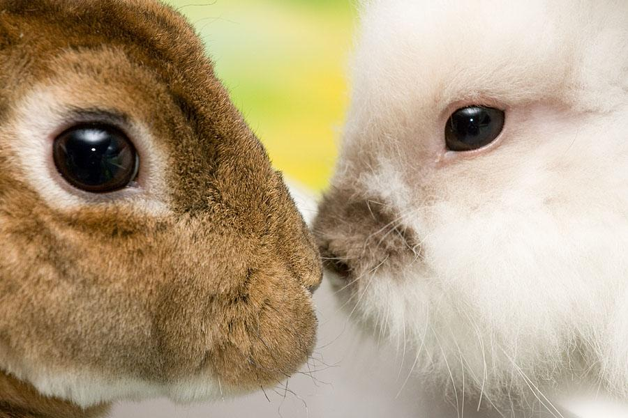 Researchers have used human stem cells to engineer multiple layers of eye tissue and restored vision in rabbits