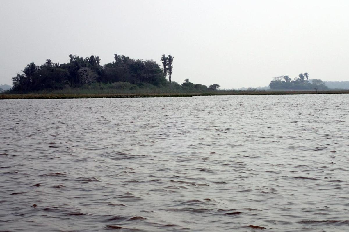 Forest island Isla Manechi where ancient evidence of squash and cassava cultivation was discovered