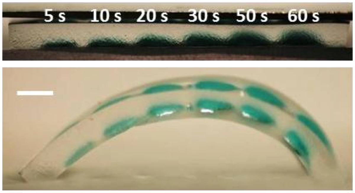 Copper ions injected into the hydrogel allow the degree of gel curvature to be dynamically controlled by an electrical current