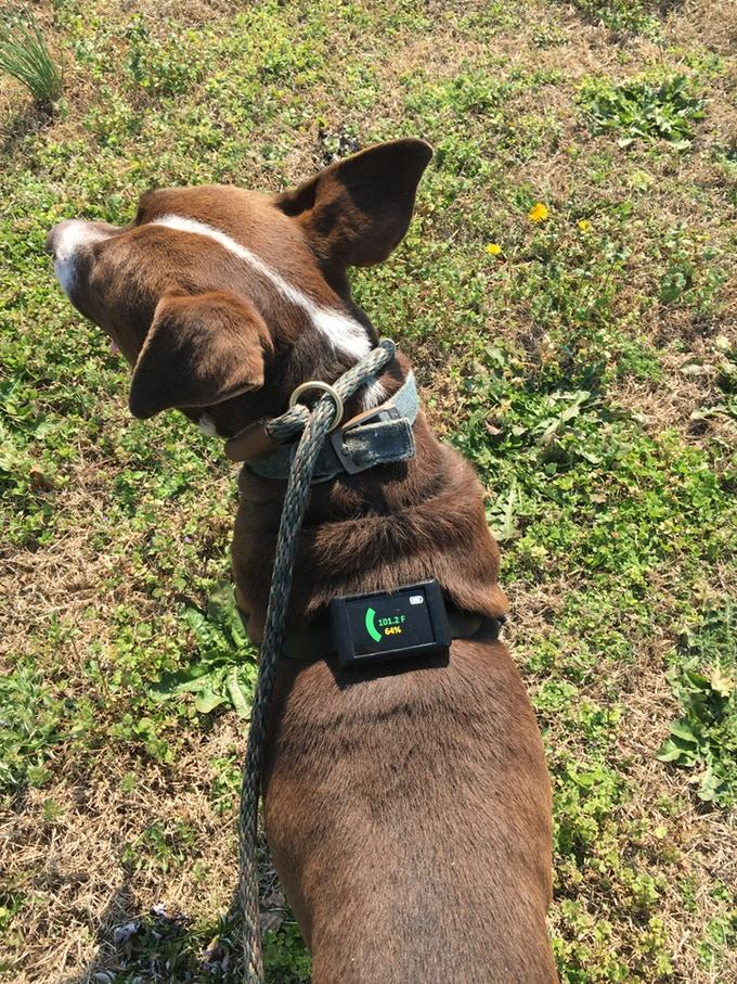 The Dawg Tag's color-coding system lets owners know when their pet is approaching the danger zone