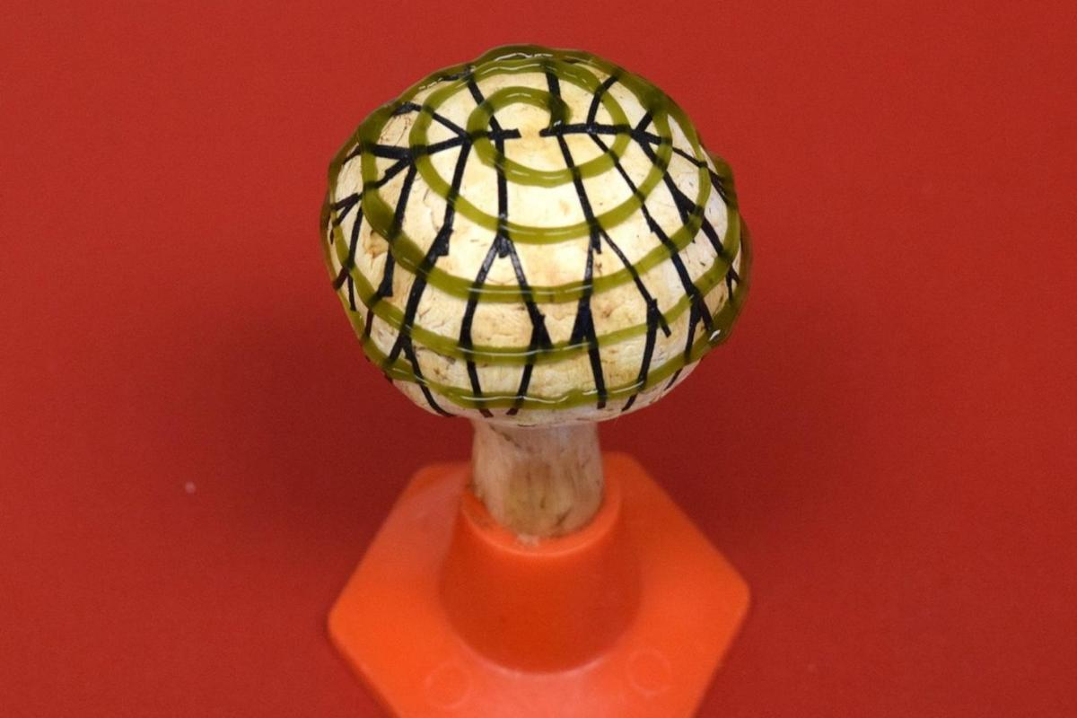 An electrode network (branched pattern) and cyanobacteria (spiral pattern) were 3D-printed ontothe mushroom