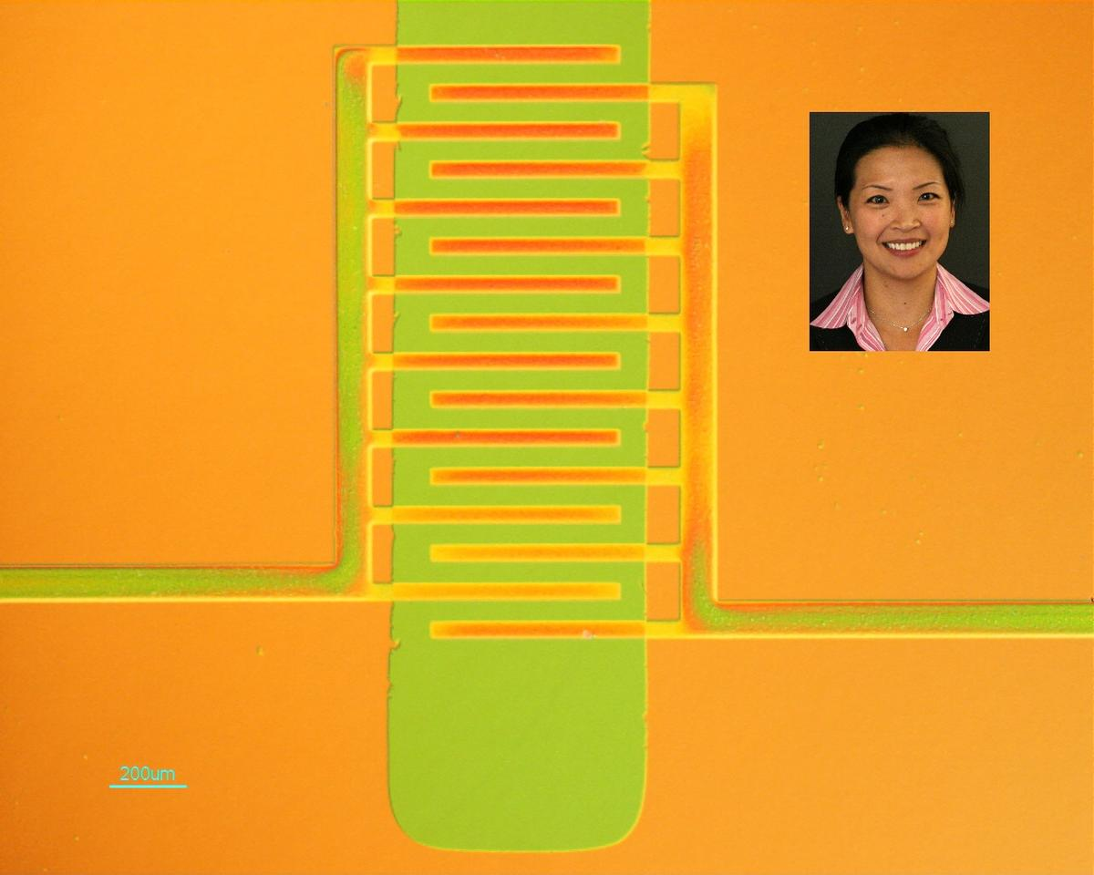 Princeton researchers have developed a new way to manufacture electronic devices made of plastic, employing a process that allows the materials to be formed into useful shapes while maintaining their ability to conduct electricity. In the plastic transistor pictured here, the plastic is molded into orange interdigitated electrodes allowing current flow to and from the green active channel - inset: Yueh-Lin Loo (Image: Loo Research Group)