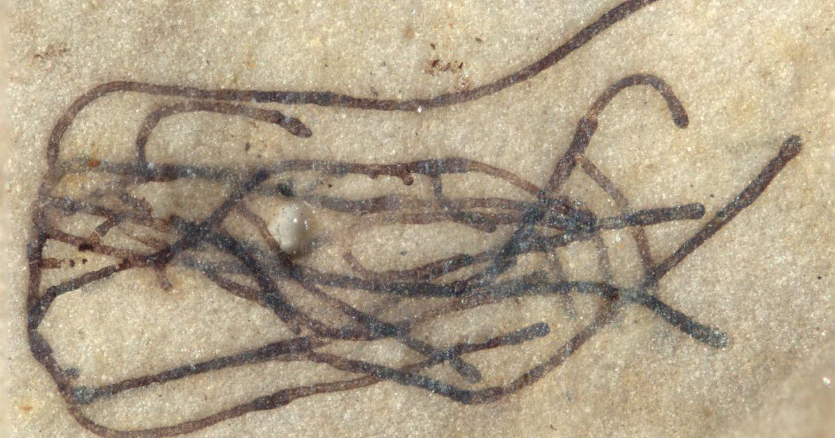 Billion-year-old seaweed fossil may be oldest ancestor of land plants
