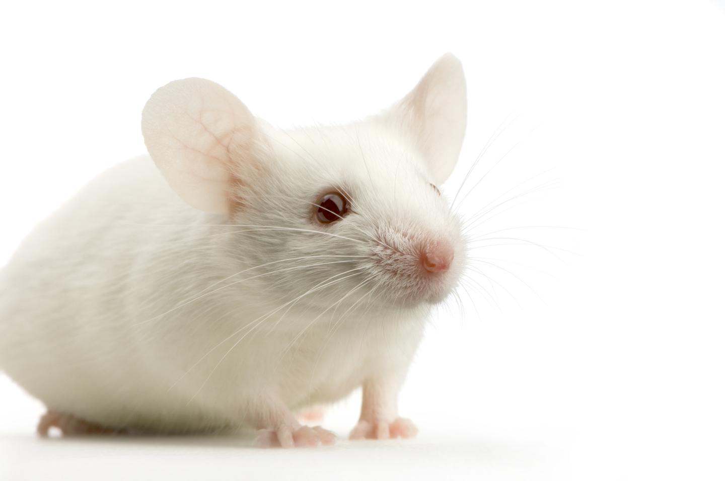 Researchers have reportedly restored near-normal vision to blind mice, using a prosthesis that incorporates the retina's natural neural code (Photo: Shutterstock)