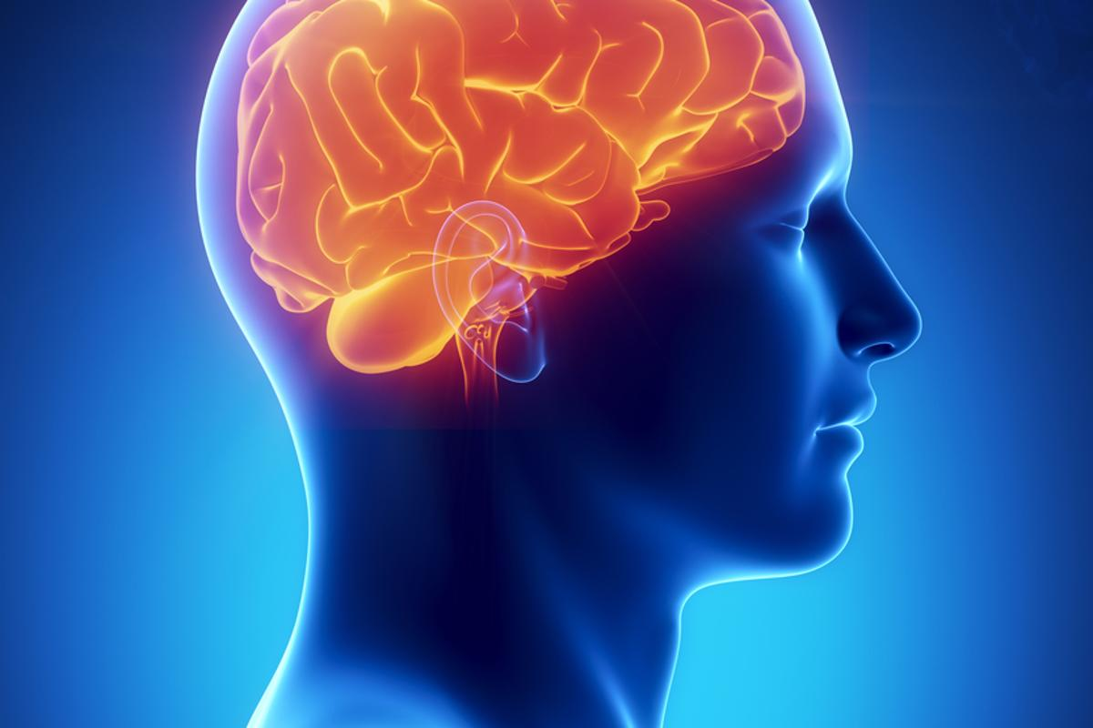 Scientists have cracked the code that the brain uses to vocalize vowels (Image: Shutterstock)