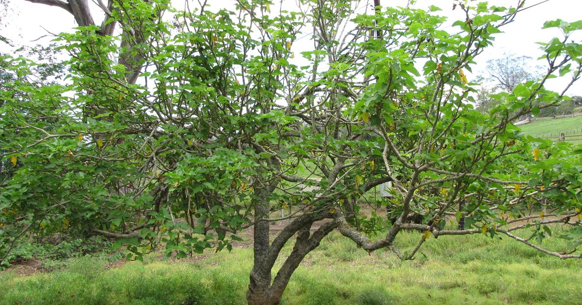"""""""Undruggable"""" cancer protein targeted by compound from shrub root"""