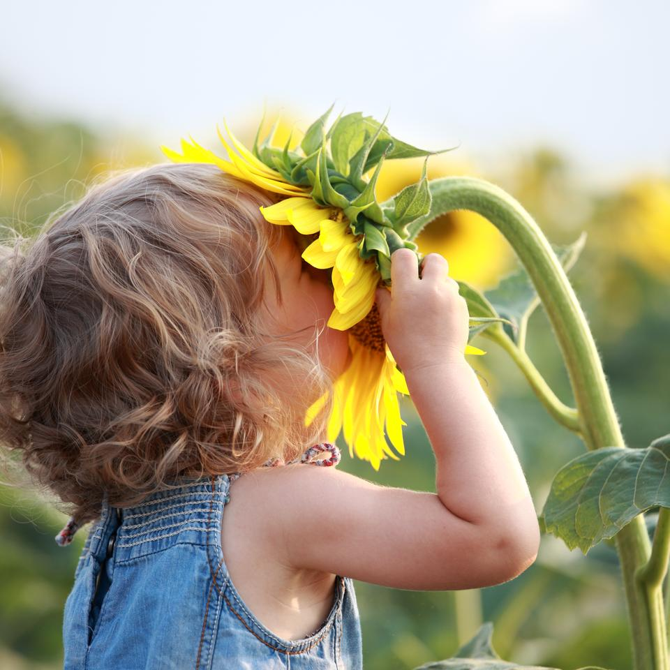 A new study examines how olfactory receptors respond to odor molecules