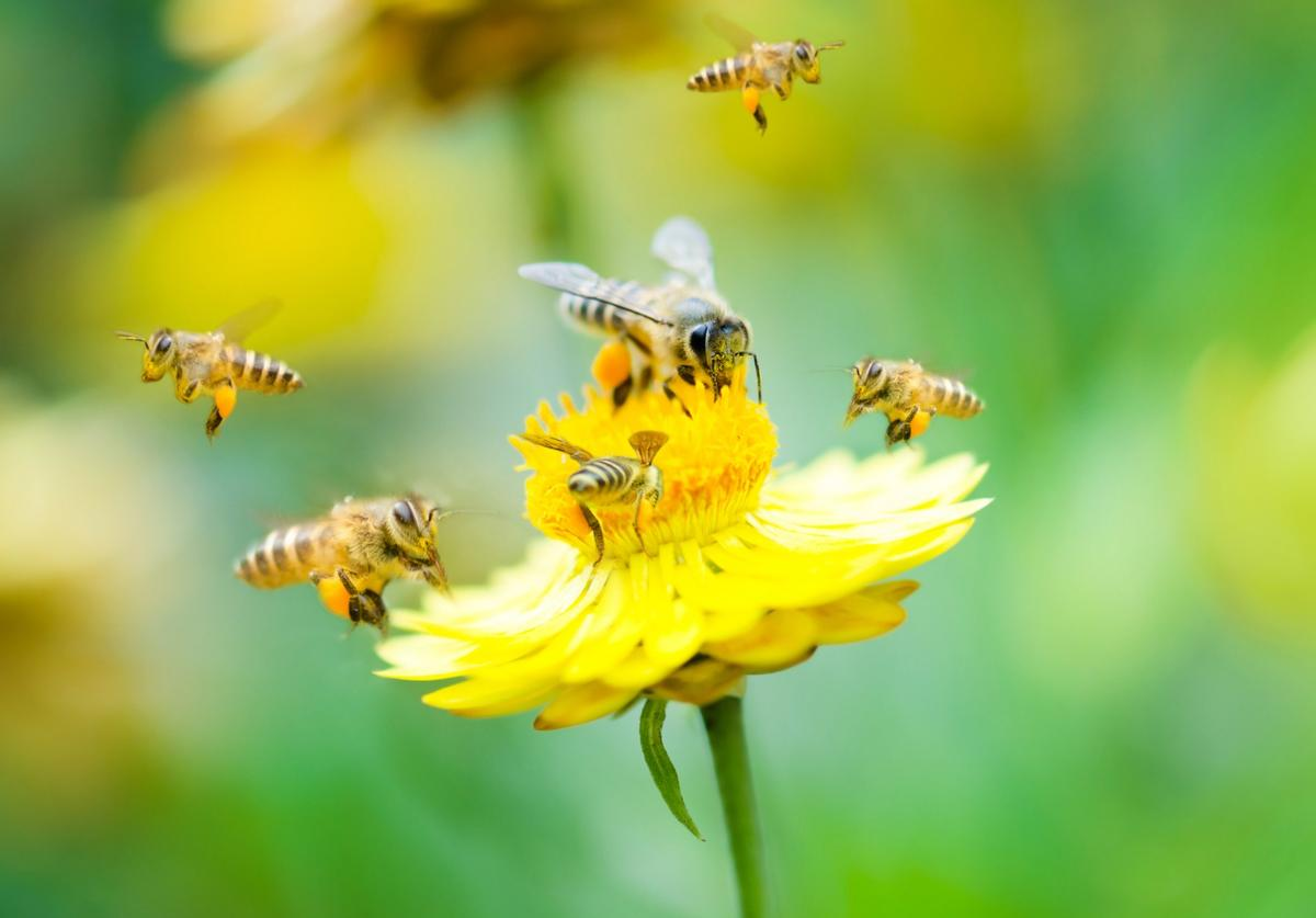Researchers have discovered that bees have the ability to add and subtract