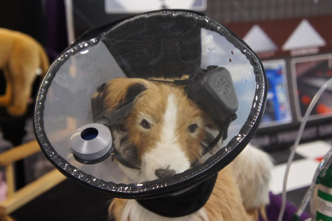 4 Paws Aviation's oxygen hood for dogs means you can take to the skies with your canine companion