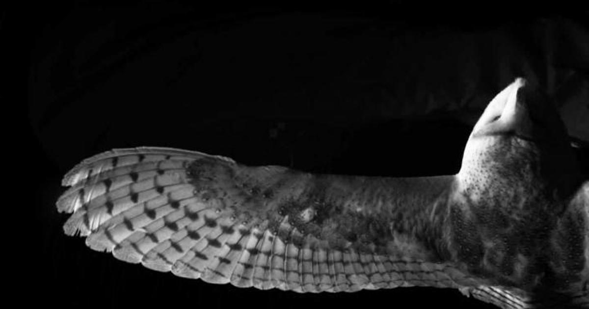 How the silence of owls in flight could lead to low-noise aircraft