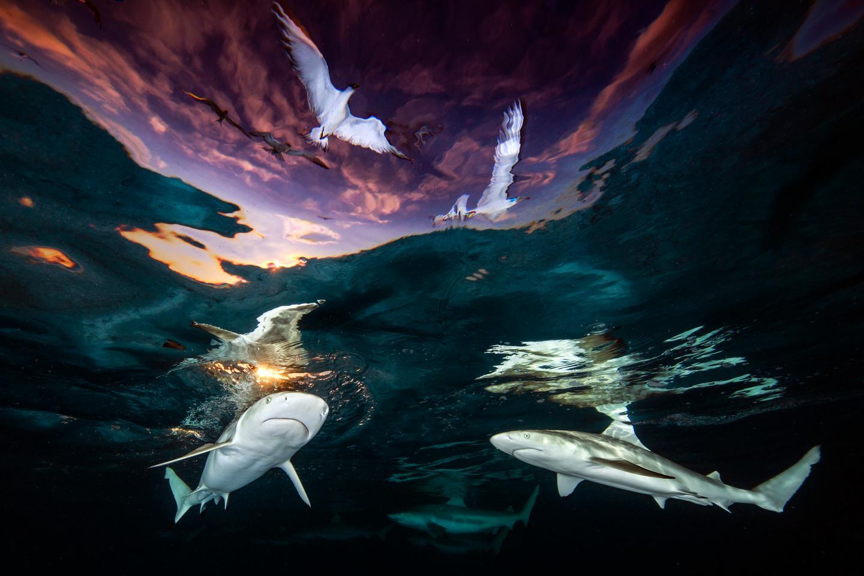 Winner. Underwater Photographer of the Year 2021. 'Sharks' Skylight'.