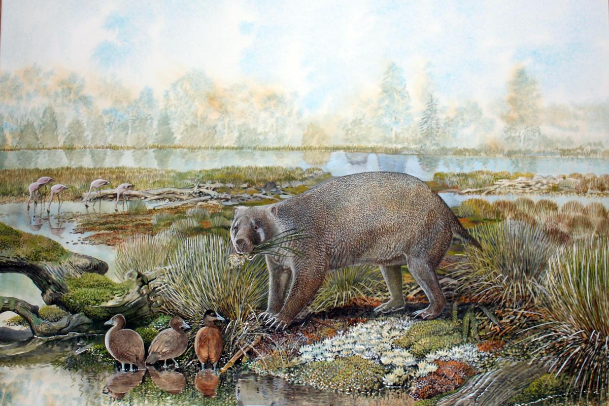 Mukupirna nambensis was over four times the size of a modern wombat