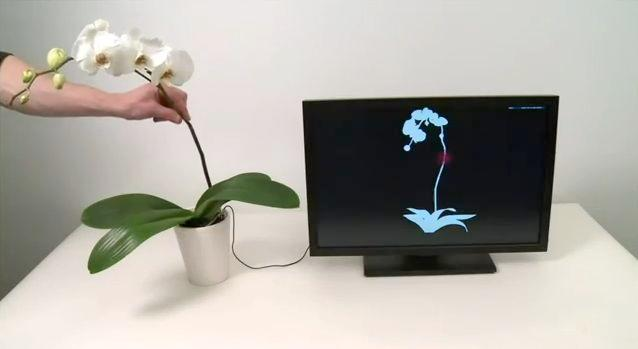 The Botanicus Interactus system allows plants to be used to control electronic devices such as computers