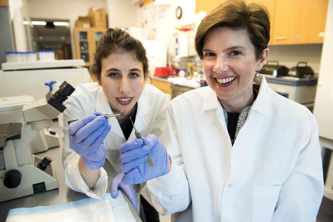 Biomedical engineering Associate Professor Brenda Ogle (right) and Ph.Dstudent Molly Kupfer, with a mouse heart