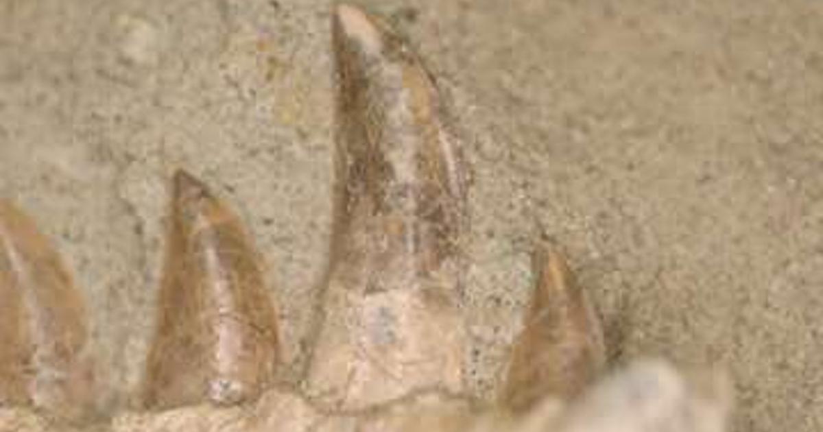 Meat-eating dinosaur replaced its teeth like a shark