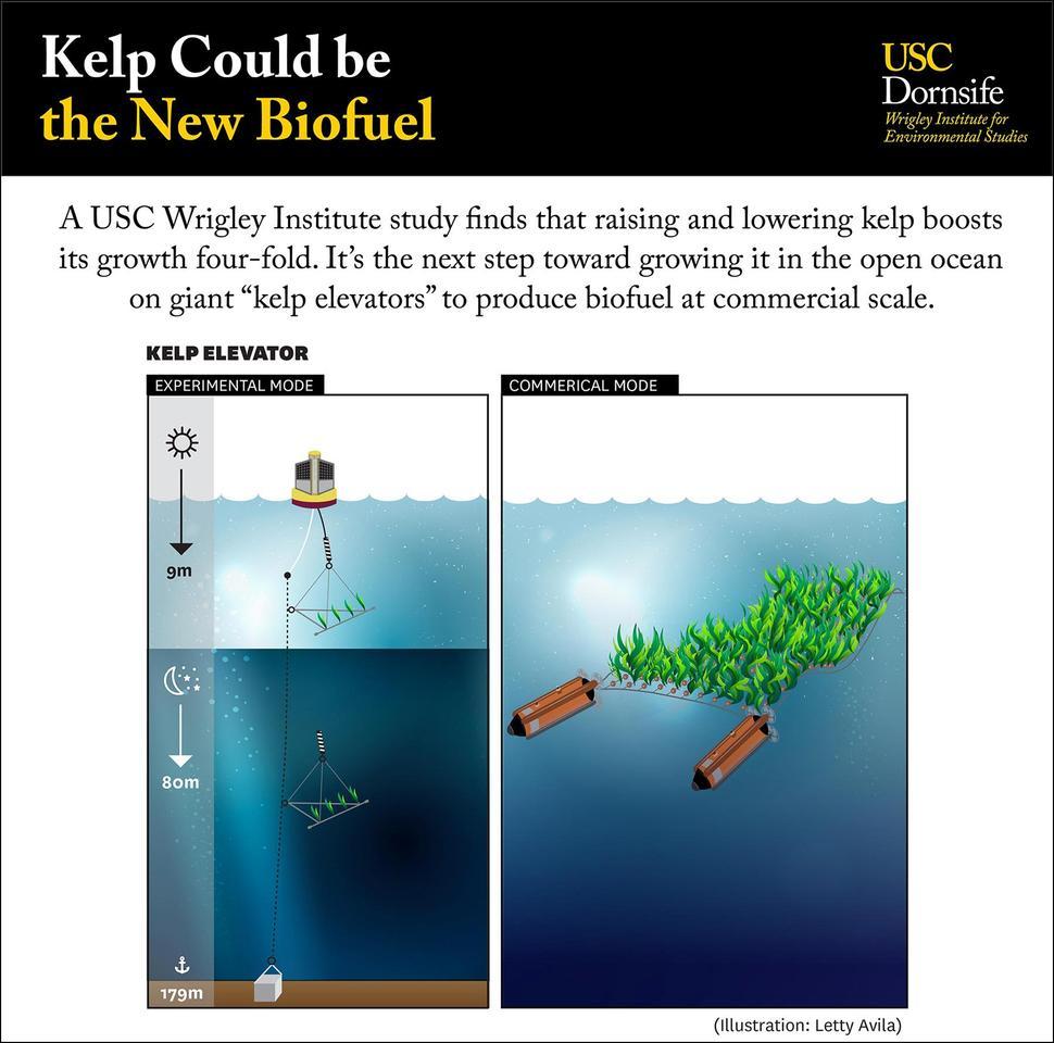 "A diagram depicting the team's ""kelp elevator"""
