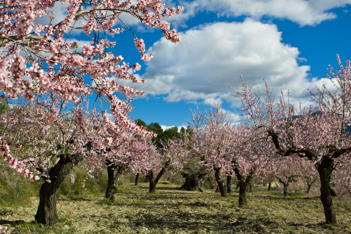 CropCoat has already been successfully used to protect almond trees from navel orange worms