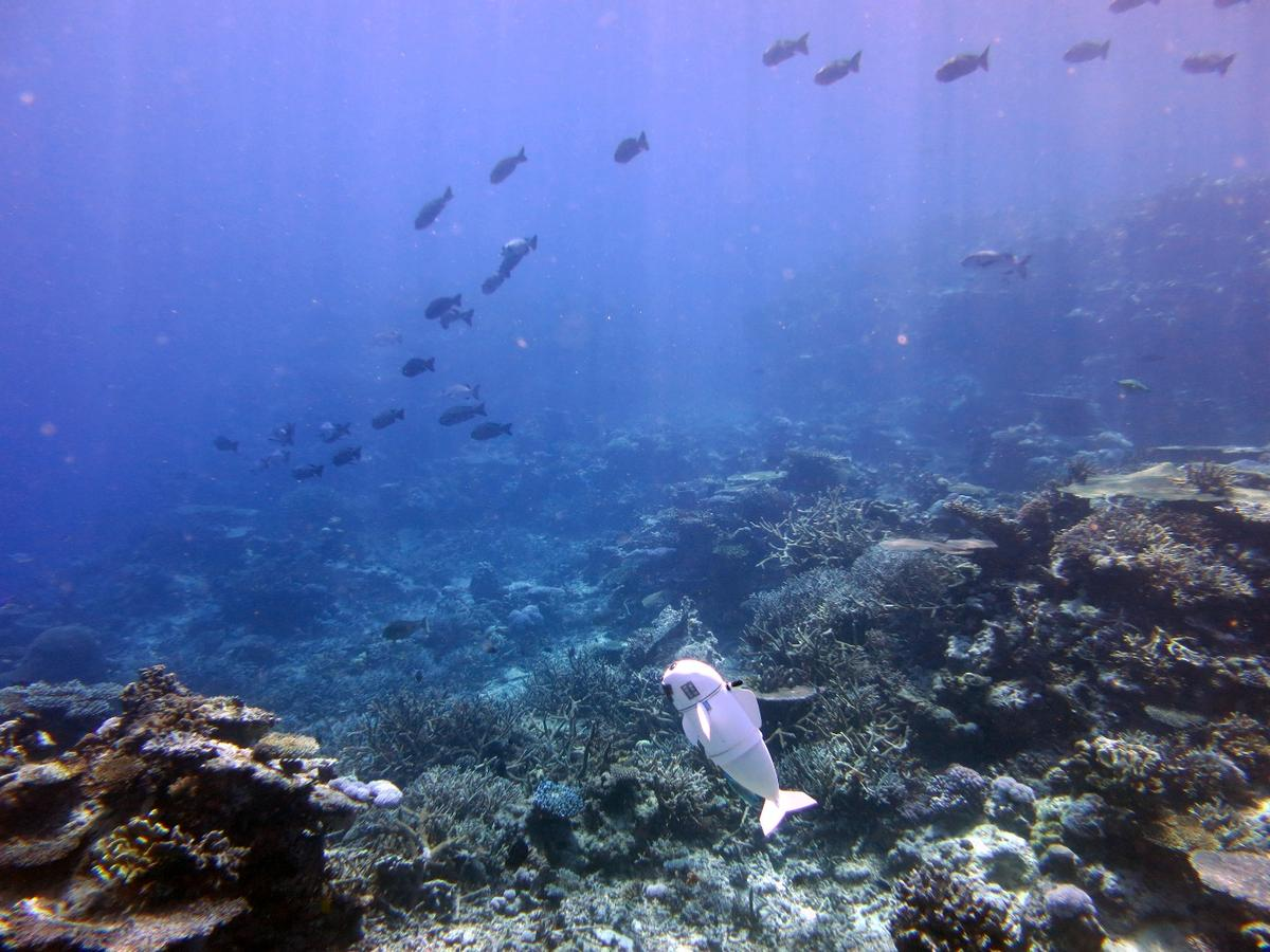 The soft exterior and quiet nature make the SoFi robot ideal for closely observing marine life without creating disturbances