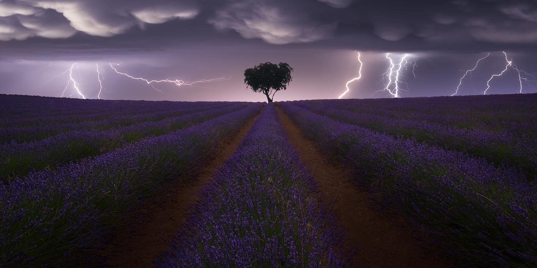 Pano Awards. Highlight - Amateur, Nature/Landscapes. 'Electric storm on lavender', Brihuega lavender fields in the province of Guadalajara, Spain