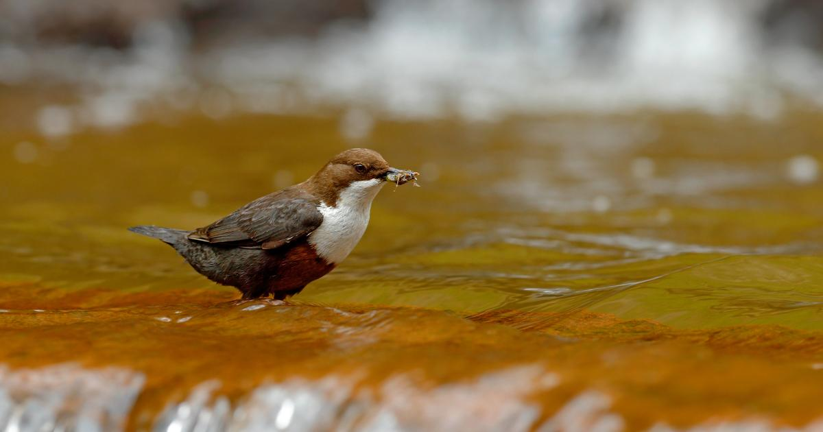 Study reveals first sign of river plastics traveling up the food chain