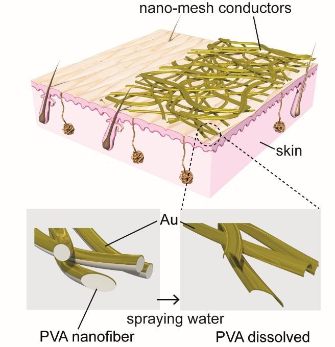 The nanomesh, constructed from polyvinyl alcohol (PVA) nanofibers and a gold (Au) layer, adheres to the skin when sprayed with water, dissolving the PVA, as depicted in the enlarged diagrams at bottom