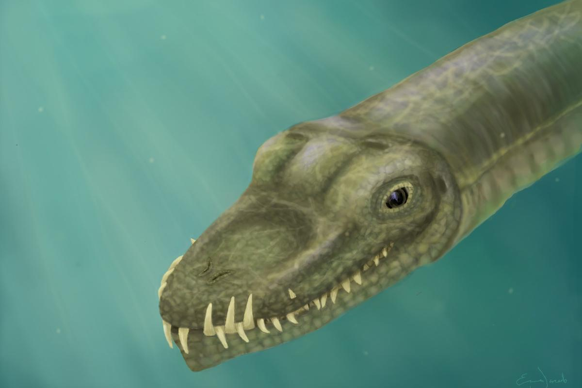 Tanystropheus had nostrils on top of its snout like a crocodile