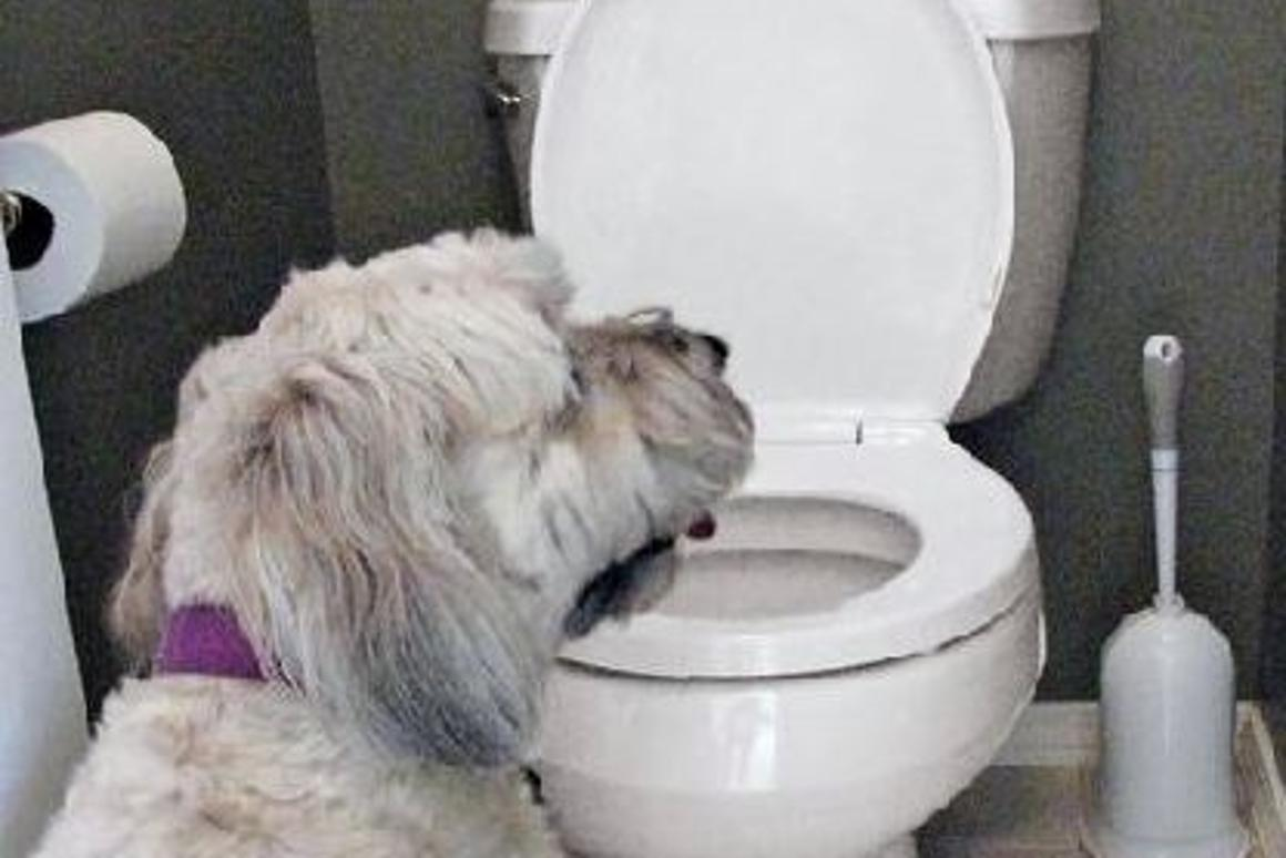 Drink No More will sound an alarm and flash a warning signal when your pet approaches the toilet