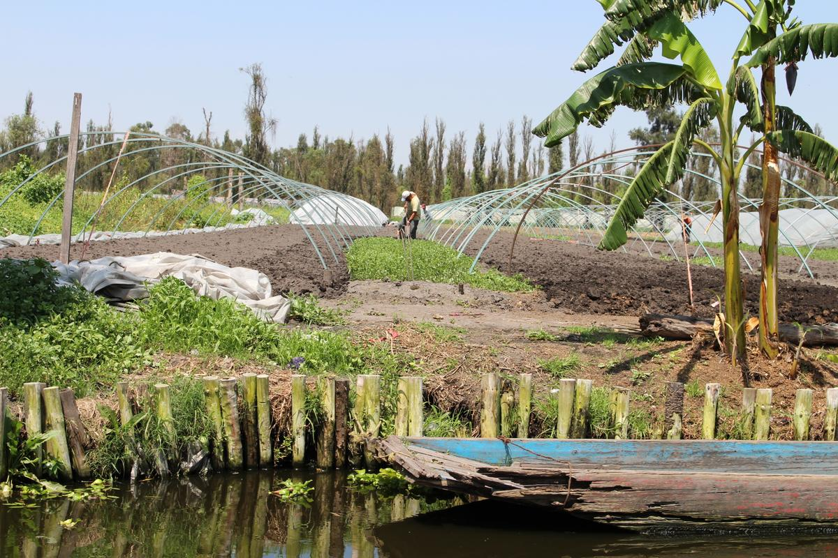 Farmers working a modern-day chinampa