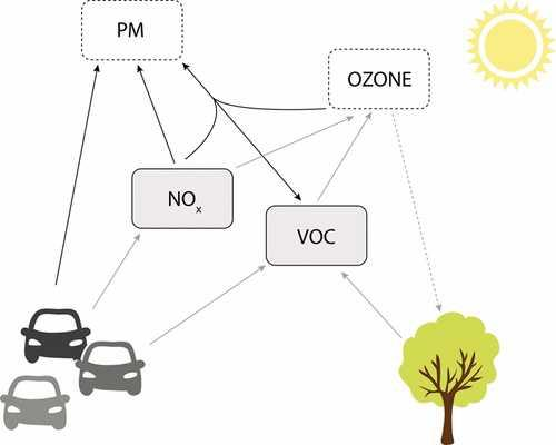 The VOCs emitted from trees and plants react with the NOx from cars to create ozone
